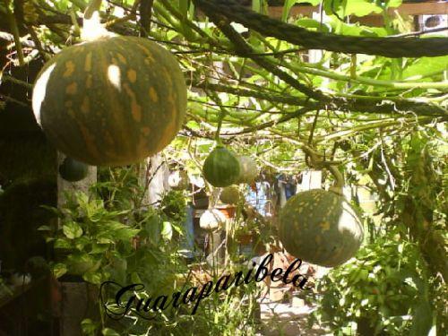 Pepino e uvas no cu - 3 4